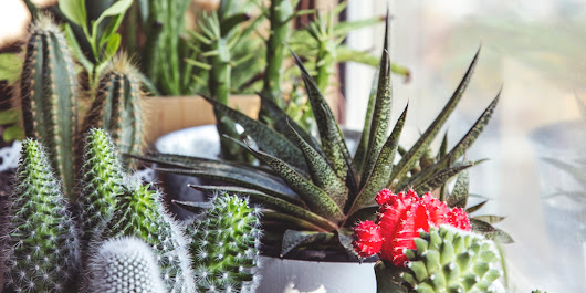 Six Popular Plant Care Myths Debunked