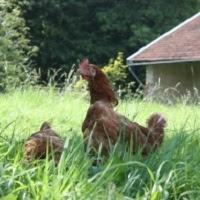 WELFARM - Protection mondiale des animaux de ferme