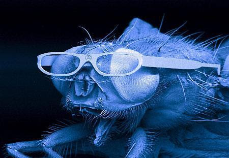 Fly dons pair of mini-spectacles