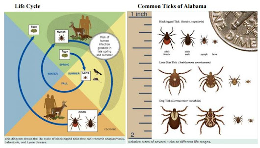 Ticks in Alabama