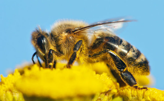 Our Garden Pest Control Could Be Harming Bees | Care2 Causes