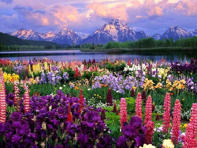 Fields Of Dangerous Flowers Willow Dawn Becker