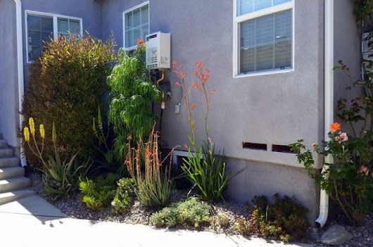 Drought-Tolerant Landscaping Tips | Xeriscaping Tips