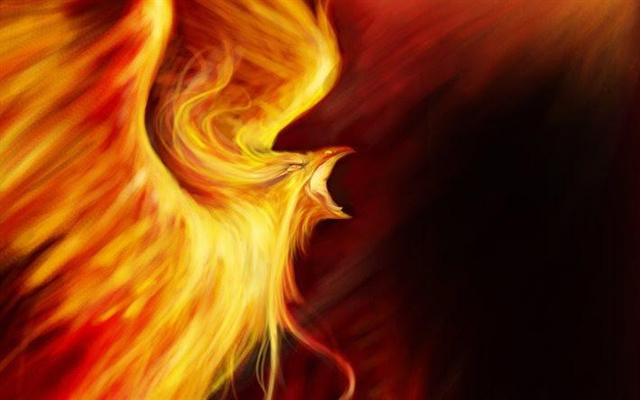 hintergrundbilder feuervogel