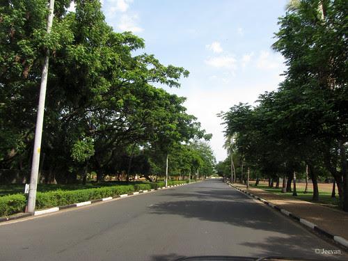 Beautiful Lane