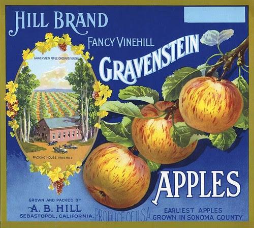 vine hill label_tatteredandlost