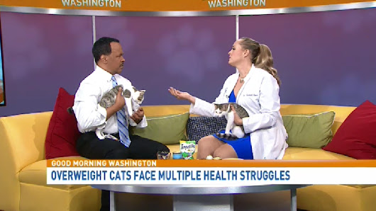 "7 tips to prevent cat obesity with ""Catvocate"" Dr. Liz Bales"
