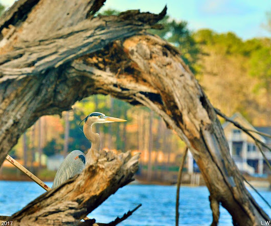 Heron Among The Trees  by Lisa Wooten