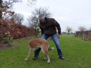 musculação para cães