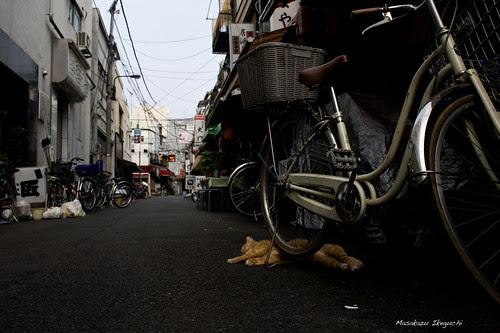 東京下町の朝