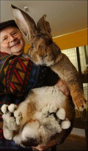 giant_rabbit3