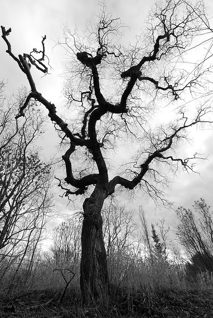 A black and white tree, bare, with branches cracking the sky.