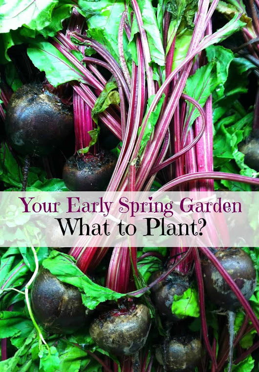 5 Plants for an Early Spring Garden