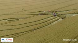 crop-westwoodoh-uk-26-7-12c.jpg