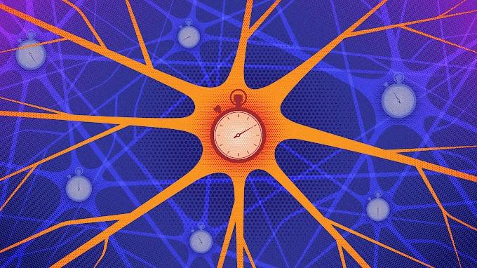 Neurônios inesperadamente codificam informações no momento de sua demissão
