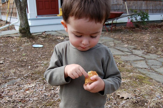 Will picking the ray-ray (raisins) out of his piece of sweet Irish soda bread by Eve Fox, The Garden of Eating blog, copyright 2011