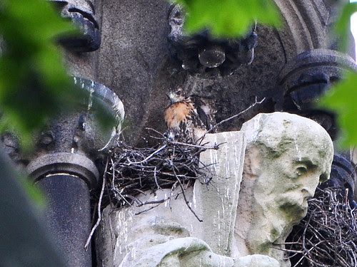Two Red-Tail Babies