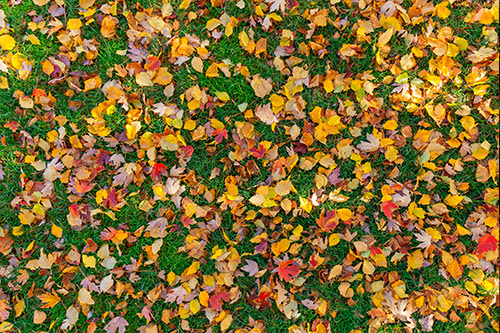 Fall Lawn Clean-Up | Vin's Total Care Landscaping