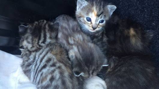 Kittens found in car due to be scrapped in Boston - BBC News
