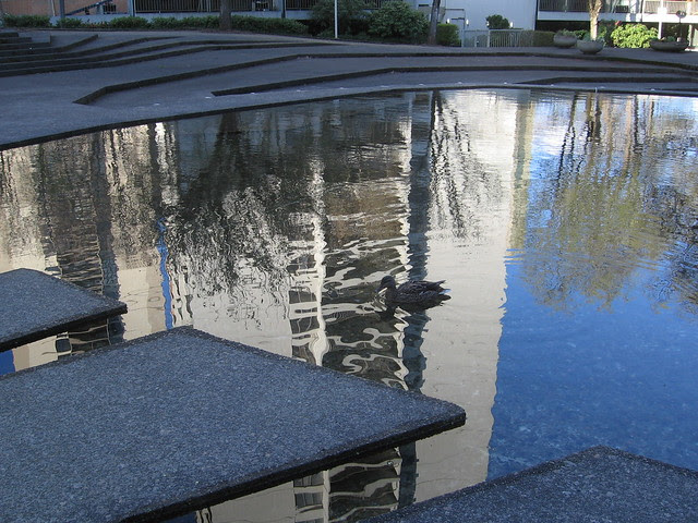 duck & reflection, lovejoy fountain