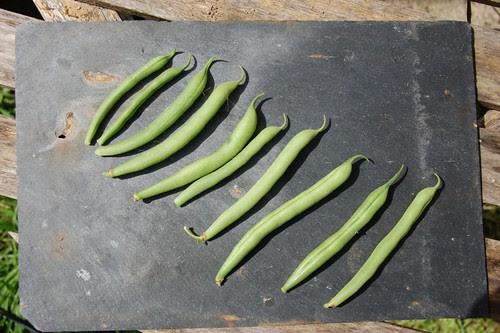 annabel beans