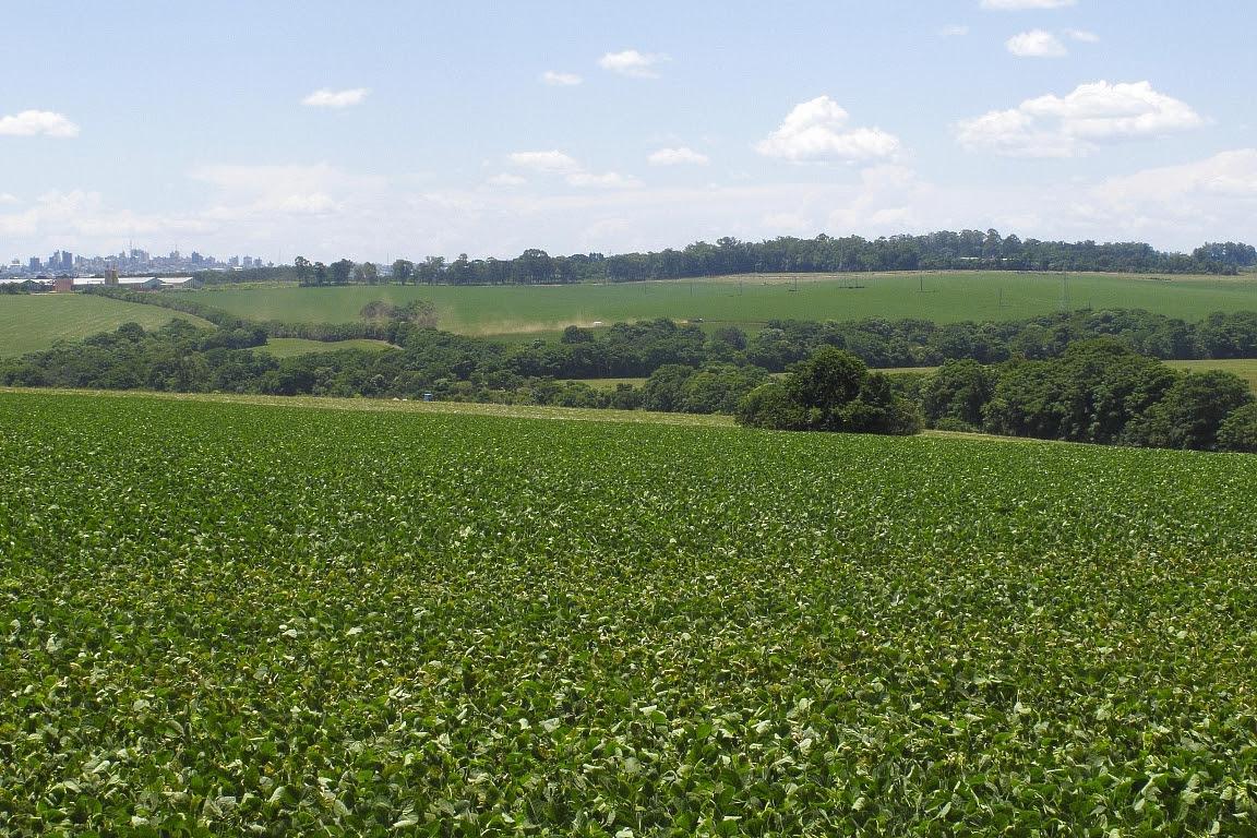 Plantação de soja em Ponta Grossa, Paraná. Foto: Otávio Nogueira/Flickr.