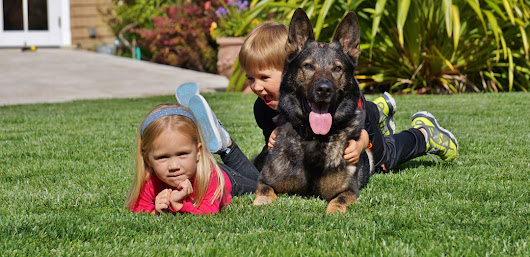 Priority 1 Canine - Dogs and Improved Child Development