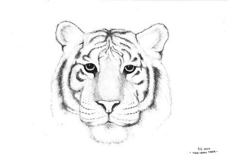 drawn white tiger cool white  tiger sketch easy