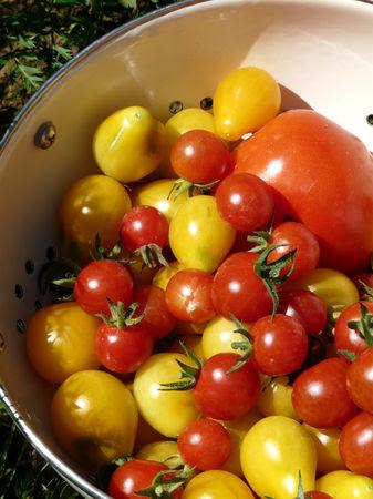 tomates_du_p_tit_jardin