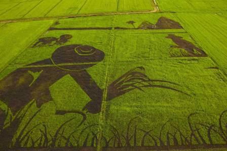 disegni nel riso