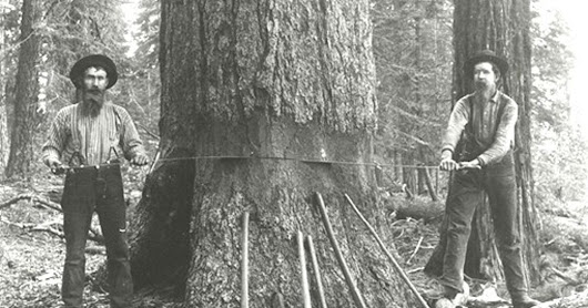 Gold & Lore: Birth of the Shasta County lumber industry