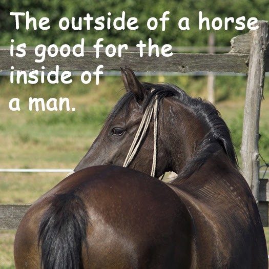 Horse Quotes And Sayings For Equine Enthusiasts