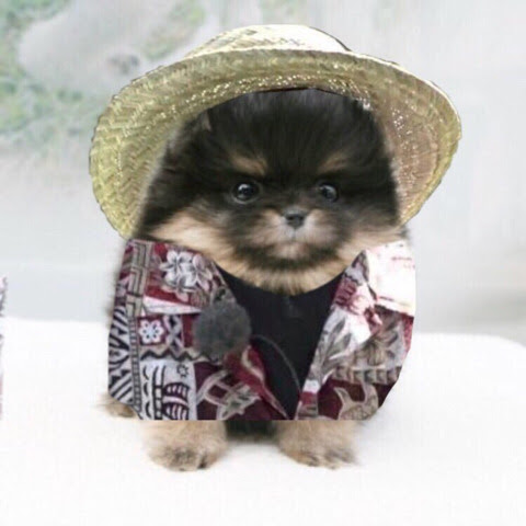 Is Yeontan A Boy Or Girl