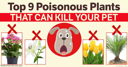Keep Your Pet Away From These Noxious Plants
