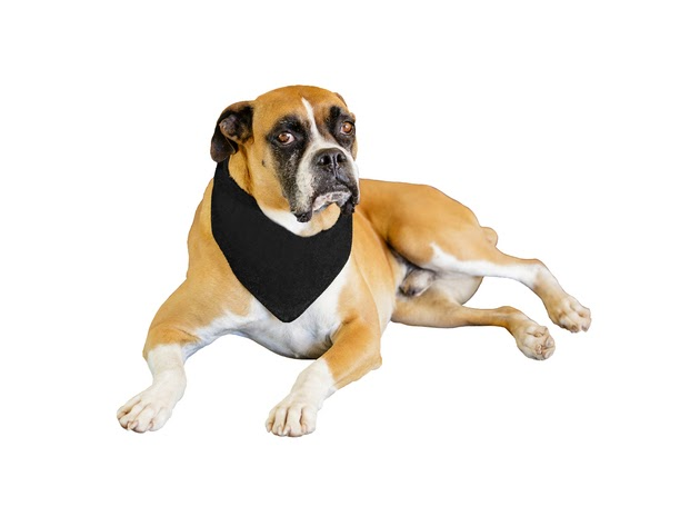 Mechaly 6 Pack Solid Polyester Dog Neckerchief Triangle Bibs - Extra Large - Black for $22