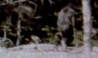 Is there a second Bigfoot in the Patterson Film?