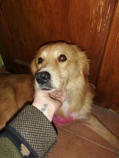 Lionel – 2 year old male Cross-Breed