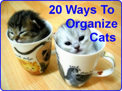 20 Brilliant Ways To Organize Your Cats | Petslady.com
