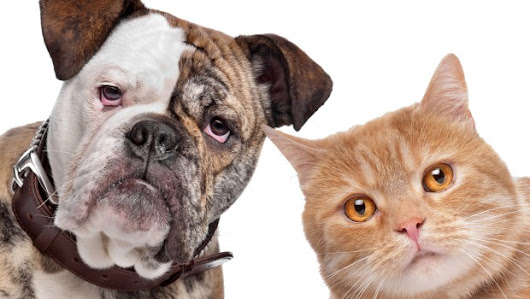 Can Pet Allergies and Dating Coexist?