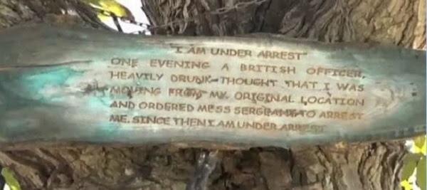 Cây bị bắt giữ hơn 100 năm, nghe có vẻ lạ nhưng đúng là như vậy! - Ảnh 2.