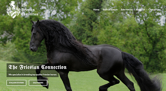 The Friesian Connection || CurlyHost LLC