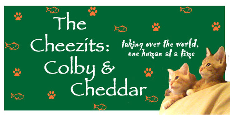 The Cheezits: Colby and Cheddar