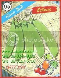 เมล็ดพันธุ์ถั่วลันเตา