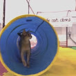 Trainers Talk: What Is Cat Agility? — Video