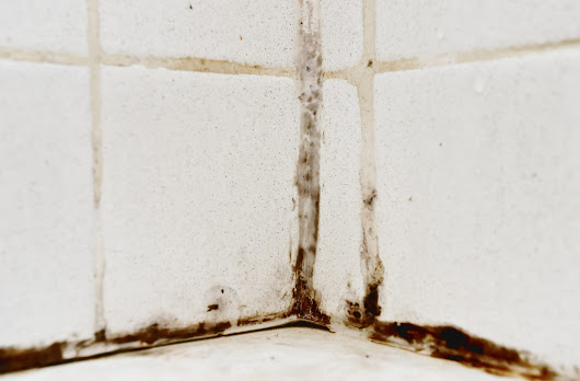 The Dangers Of Mold : 5 Tips and Tricks you need to know -