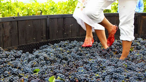 Valencia, Spain - Unique Chance To Stomp Grapes In Valencia
