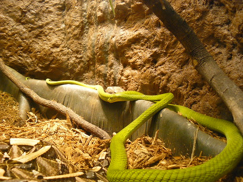 Reptiles & Amphibia, Museum of Science, Boston by skasuga