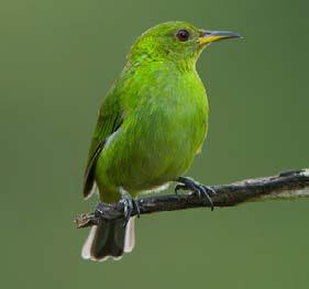 ubatuba-meio-ambiente-ornitologos-3-bx