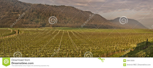 Vineyards panorama fields view on Italy