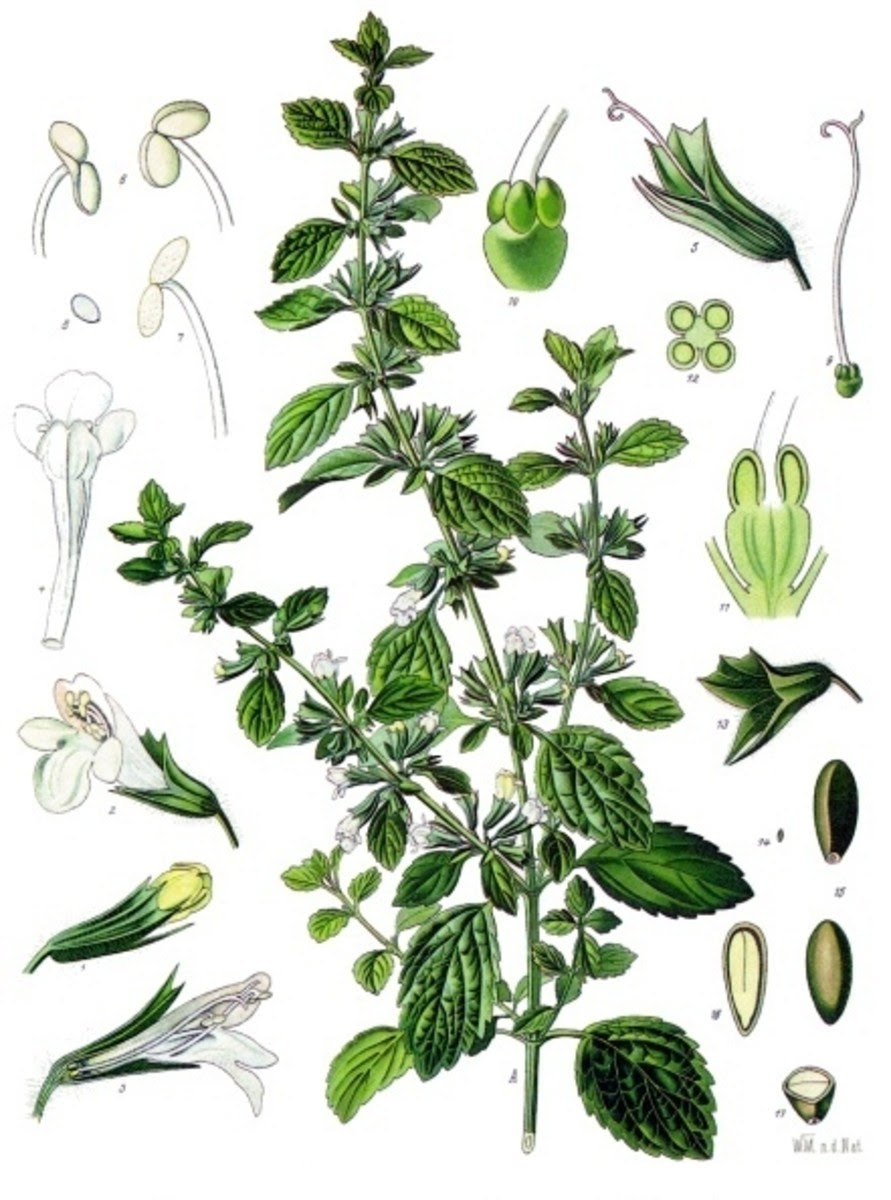 Aromatic herbs for y